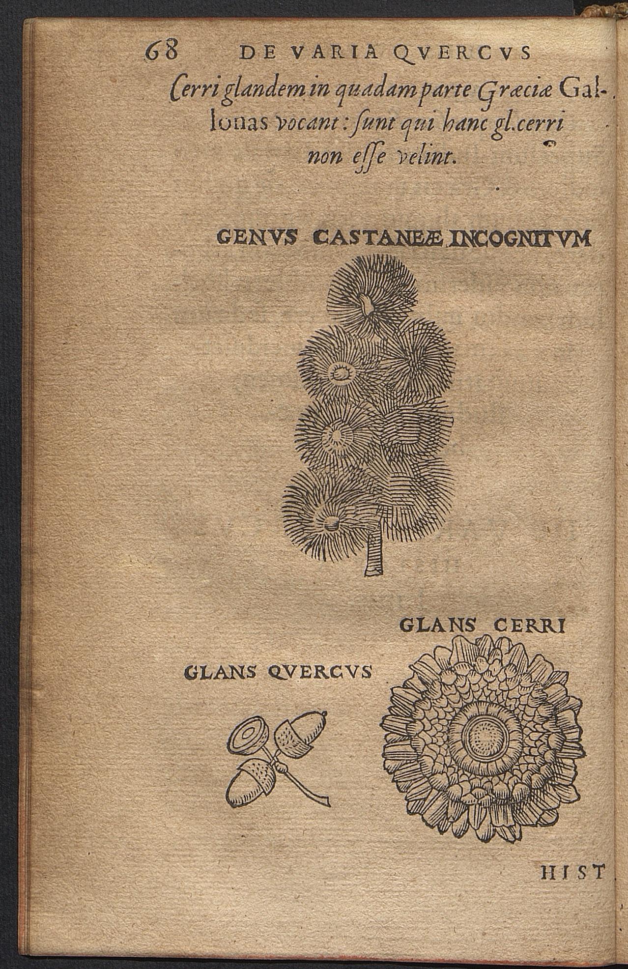 De varia quercus historia : accessit Pylati Montis descriptio